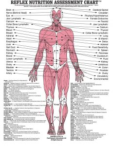 RNA Chart - Poster